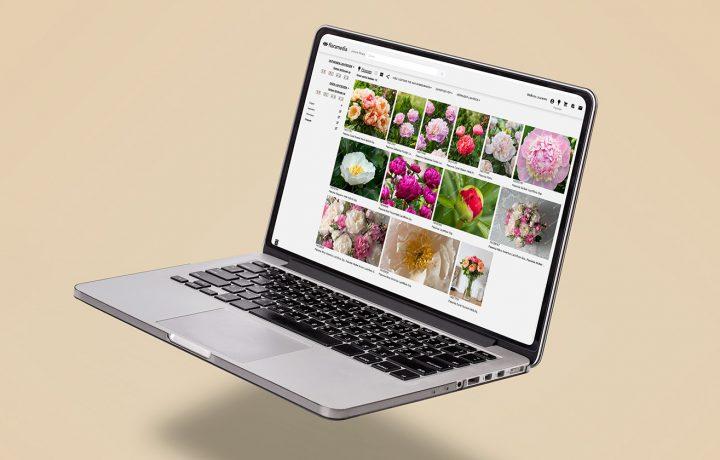 Floramedia-Service_phototheque_horticole