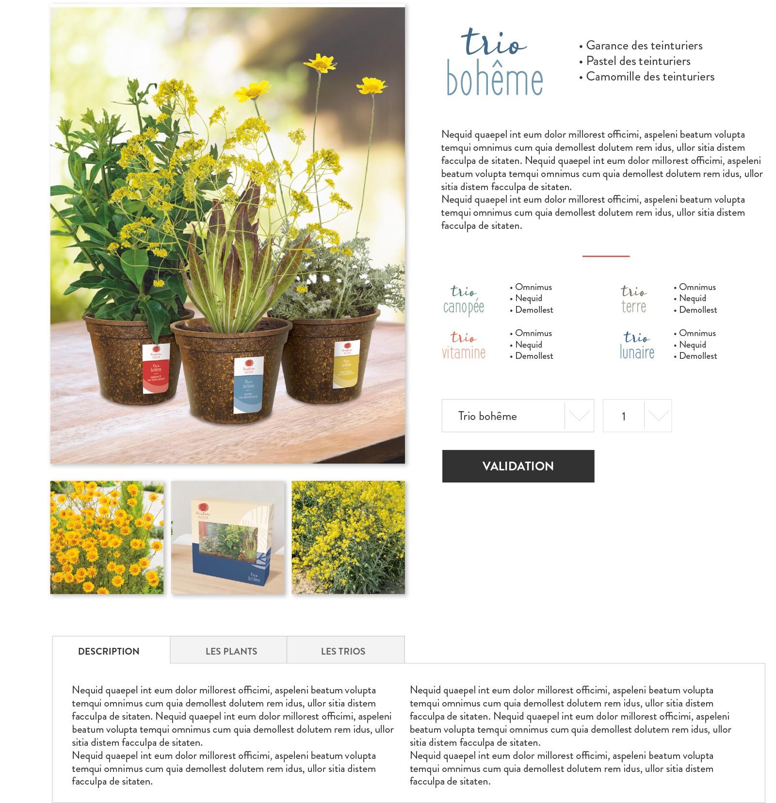 Floramedia Portfolio ConceptTeinture Nature site web